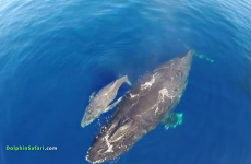 Awe-inspiring footage of huge whale and dolphin 'stampede' off California