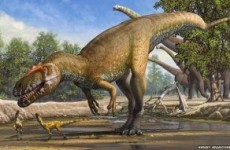 Newly-discovered dinosaur was the T Rex of its day*