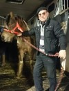 Group raises €2k in one day to save seven ponies from being put down