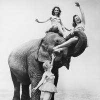 Dublin council bans animal-act circuses on public land