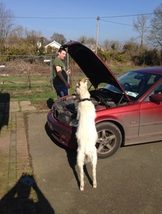 A goat mechanic and electric puns: 9 weird (and wonderful) pics our readers sent us
