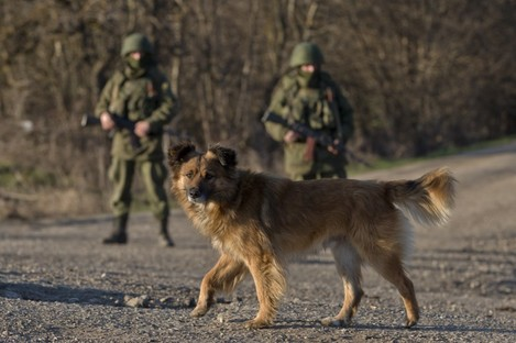 A dog walks past Russian soldiers standing outside a Ukrainian infantry base in Perevalne.