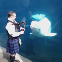 Man plays bagpipes for whale with magical results
