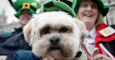 500,000 people, 1 event… It's the St. Patrick's Day Parade in numbers