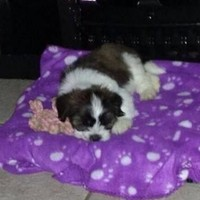 Appeal after Missy the puppy is stolen during burglary