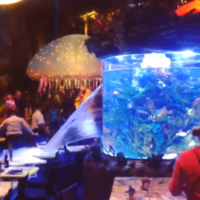 Giant fish tank bursts at Disney restaurant while people eat dinner