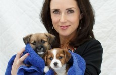 New puppy centre built to deal with Ireland's abandoned dog crisis