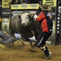 Yee-haw! Here's Chad Ochocinco getting thrown off a wild bull