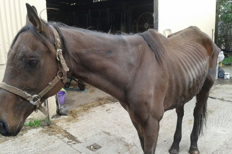 Forest, who was found emaciated in a field.