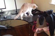 Watch this cat lose a dramatic stand off with some sellotape