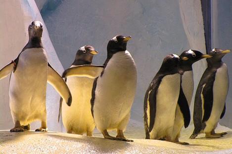The penguin enclosure at Dingle Oceanworld.