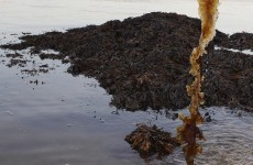 Government accused of moving to privatise seaweed cutting