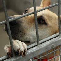 Over 3,500 dogs were put down by pounds last year