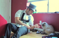 These unimpressed cats couldn't care less about magic tricks