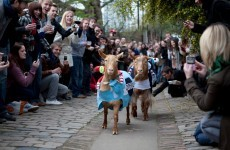 Forget boats, two GOATS are racing for Oxford and Cambridge glory