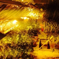 'Sophisticated' cannabis growhouse discovered by gardaí in Tuam