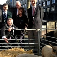 Two ministers, some sheep, and a city centre photo-op. What could go wrong?
