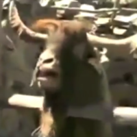 Game of Goats is the most ridiculous thing you'll see today