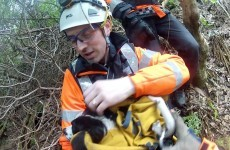 Video and photos: Coast Guard rescues a dog at Howth cliff