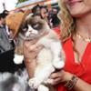 Grumpy Cat wore Pharrell's hat to the MTV Movie Awards
