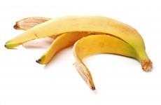 The world's banana crop is in danger of 'massive destruction'