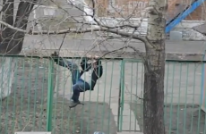 Man's epic struggle to climb over fence ends in the most humiliating way