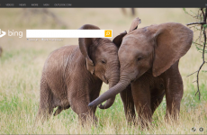 Bing's homepage today includes a giant elephant penis
