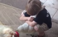 Little boy gives chicken a great big hug