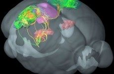 An 18-year-old intern who kept messing up brain surgery on mice accidentally stumbled on a scientific breakthrough
