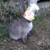Fox cub with head stuck in a can gets rescued... and says thank you