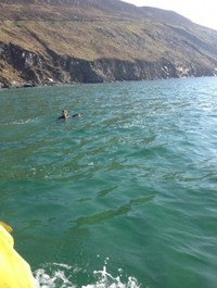 How did you spend Easter morning? This man towed a stranded dolphin back to the depths off Achill