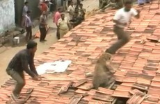 Wild leopard shocks rescue workers by leaping up through roof