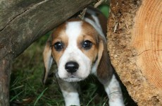 'Looking for a miracle': Kildare Animal Foundation launches urgent funding appeal