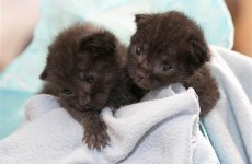 Two newborn kittens survive being boxed up and shipped 120 miles