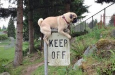 14 first world anarchists who laugh at your 'rules'
