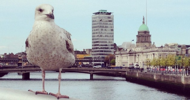 Irish dancing and toilet paper barriers: 11 weird (and wonderful) pics our readers send to us