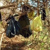 Dead cats found hanging from trees in plastic bags in New York