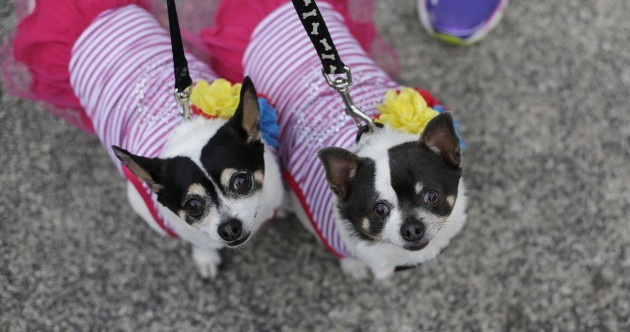 9 joyous photos from the crazy, wonderful Fiesta Pooch in Texas