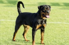 Police called after UK rottweiler registered to vote