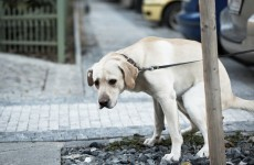 The government must do more... to deal with dog poo