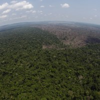 Brazil's rainforests under threat after agricultural lobby wins key vote
