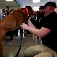 Watch this soldier's emotional reunion with his bomb-sniffing dog