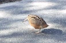 Just a little bird dancing to some Daft Punk