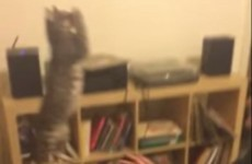 You've never seen a cat jump quite like this