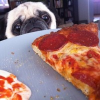 8 dogs who just really want one tiny slice of your pizza, okay?