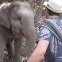 Adorable baby elephant dances with tourist in Thailand