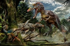 New species of dinosaur discovered in China