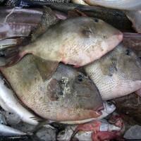 Fish rainfall surprises residents of Sri Lankan village