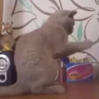 Cute cat tries to understand dubstep, fails