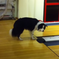You've never been as baffled by anything as this dog is over a buzzer